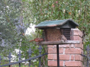 sharing at the feeder Sat. morning
